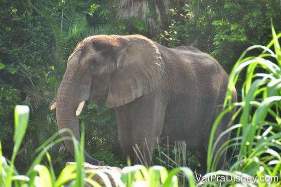 O safari do Animal Kingdom é uma das atrações mais legais do parque a qualquer hora do dia, mas de manhã é o melhor horário para pegar os animais acordados.