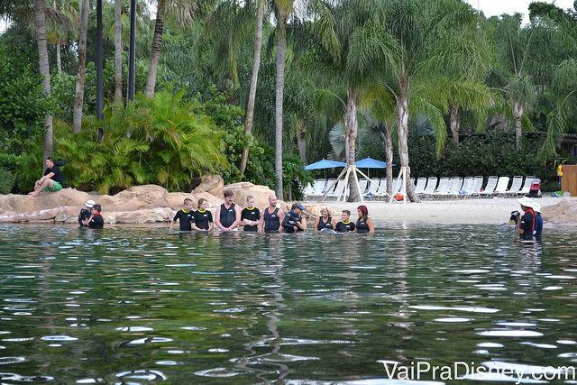 Grupo entrando na piscina com os golfinhos no Discovery Cove