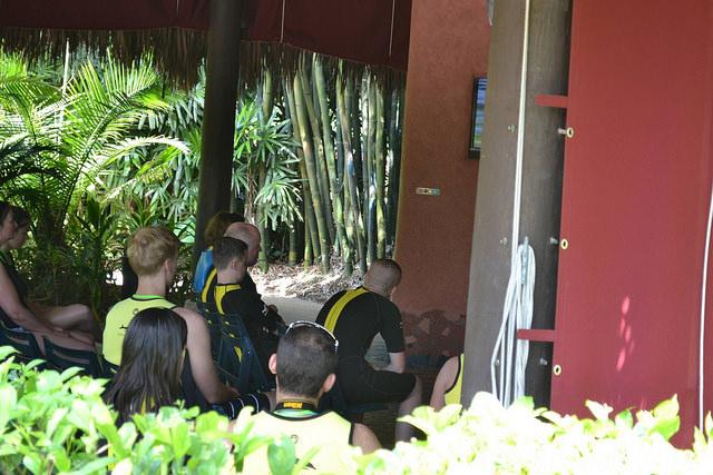 Grupo reunido para a orientação antes de entrar na água com os golfinhos no Discovery Cove