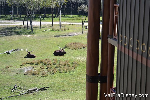 No Animal Kingdom Lodge é possível ter quartos com vista para os animais.