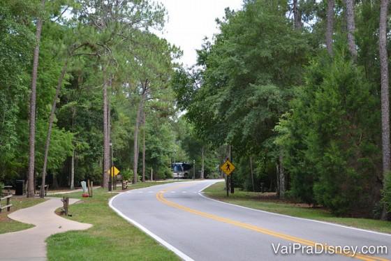 Foto da floresta dentro do complexo Disney, com as árvores, a rua e um ônibus visível ao fundo