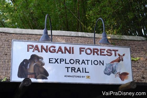 Pangani Forest te permite admirar os gorilas.
