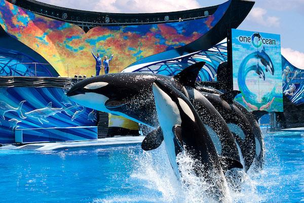 São muitos os shows apresentados no Sea World por isso é importante ficar de olho nos horários.