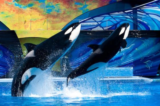 O One Ocean, atual show com as baleias, é o show mais famoso do parque hoje.