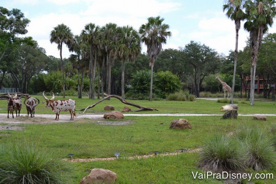 Quem tá vendo a girafinha ali no fundo?