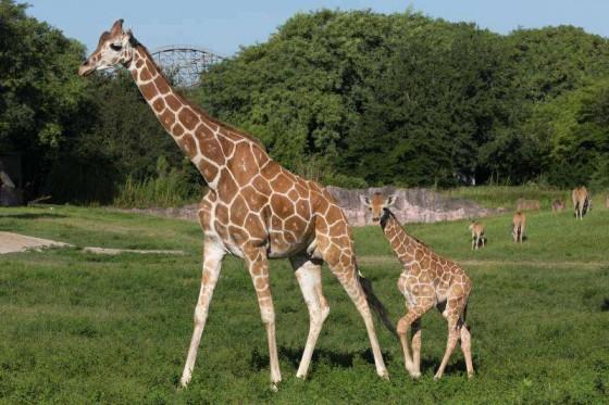 Provando que o Busch Gardens não vive só de montanha-russa