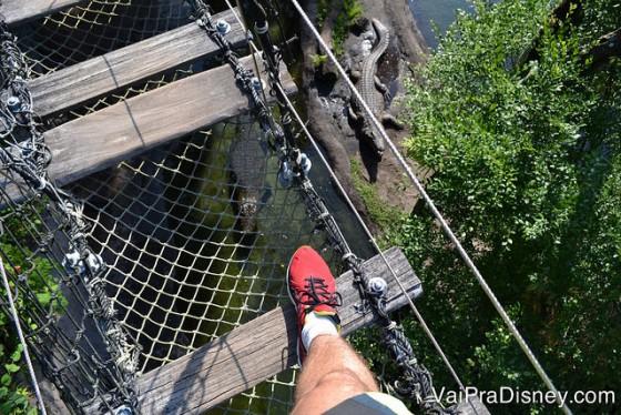 Foto da ponte de madeira e rede com os crocodilos logo abaixo