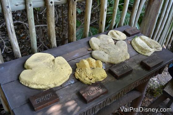 Foto de moldes mostrando o tamanho das pegadas de alguns animais, como rinoceronte, leopardo e hipopótamo