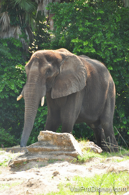 Foto do elefante durante o Wild Africa Trek