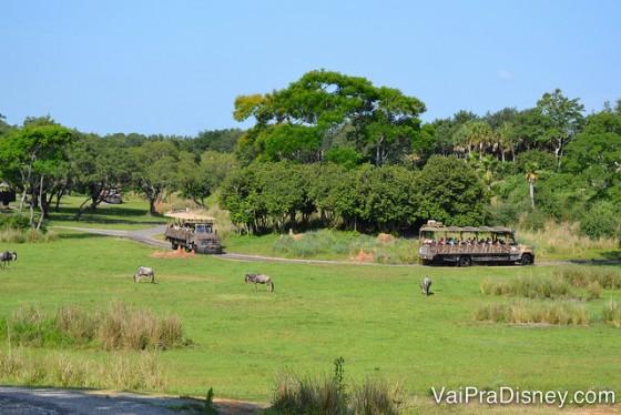 Um pouquinho do Safari do Animal Kingdom.