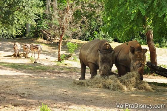 Nesse parque você tem a chance de ver vários animais de perto, principalmente no Safari.