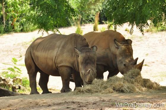 Foto de dois rinocerontes durante o tour