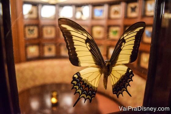 Foto de uma das borboletas exóticas do Jungle Cruise expostas na decoração do restaurante