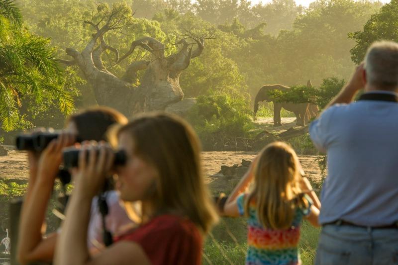 Foto do tour Caring for Giants, no qual os participantes podem ficar a até 25 metros dos elefantes do Animal Kingdom