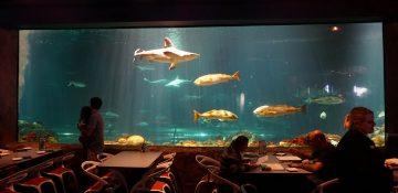 Foto do aquário com tubarões do Sharks Underwater Grill, em frente às mesas do restaurante