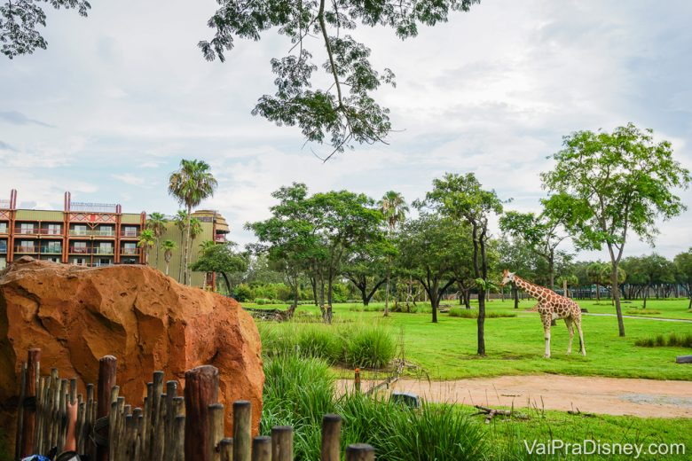 Foto da girafa na savana no hotel Animal Kingdom Lodge, cujas villas irão reabrir na primeira fase.
