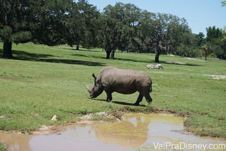 Foto tirada bem perto do rinoceronte durante o safari.