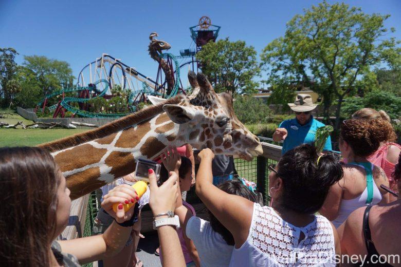 Foto dos visitantes indo à loucura quando a girafa chegou, fazendo carinho nela por cima da cerca