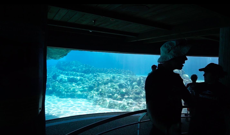 O tanque é bem grande, então nem sempre dá pra ver os golfinhos dali, mas ainda assim ele acabou tomando mais a atenção do grupo do que o próprio guia.