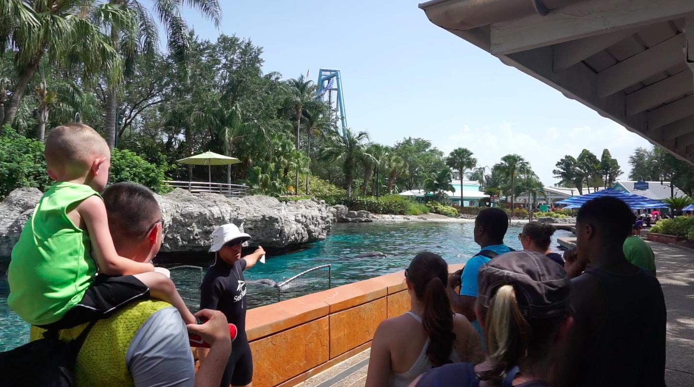 Os golfinhos estavam todos na superfície do tanque, curtindo o sol, enquanto os visitantes olhavam