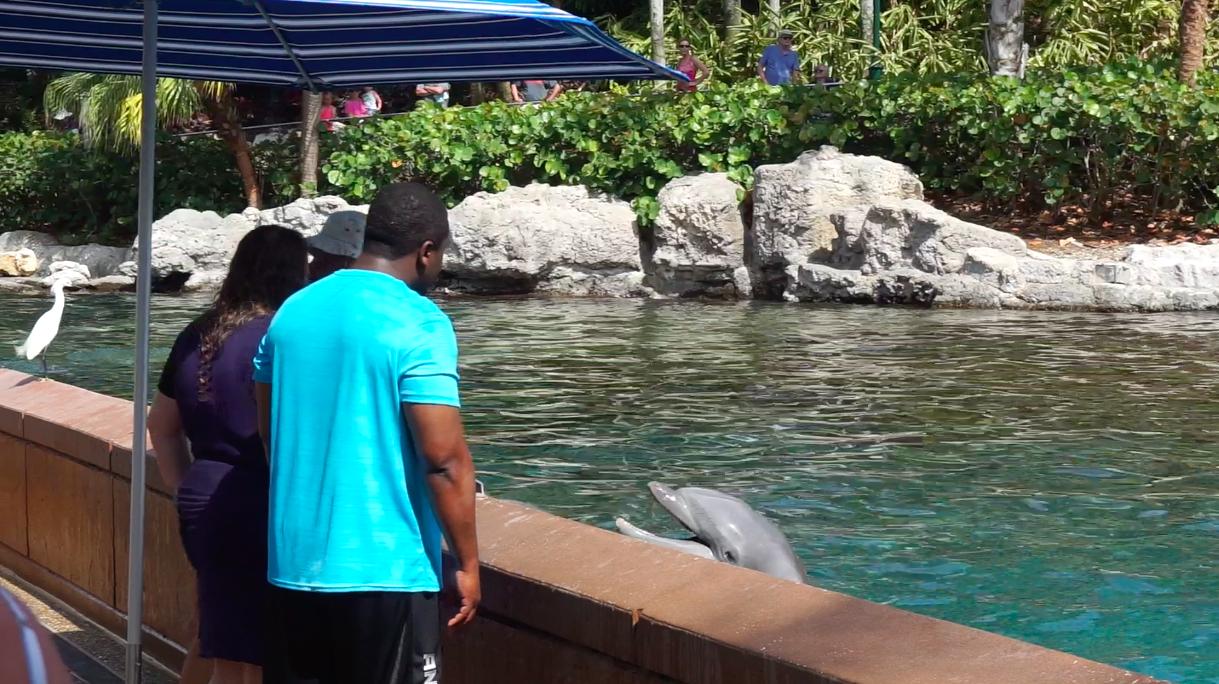 Quem participa do Dolphin Up-Close Tour chega bem pertinho dos golfinhos. Dois visitantes na foto estão à beira da piscina, perto de um golfinho