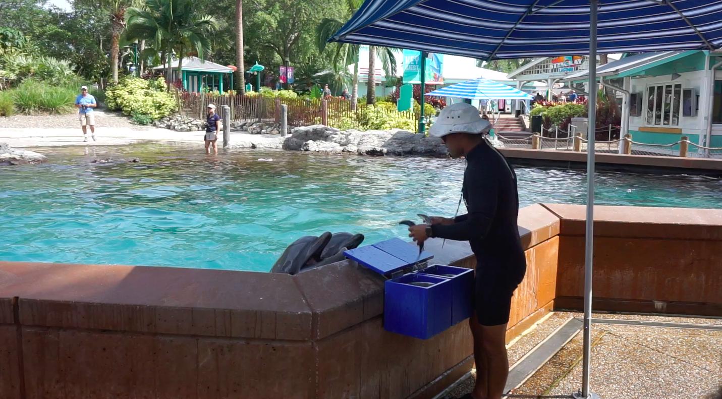 Depois de cada comando, o instrutor tira peixes de uma caixa azul e dava na boca dos golfinhos como recompensa.