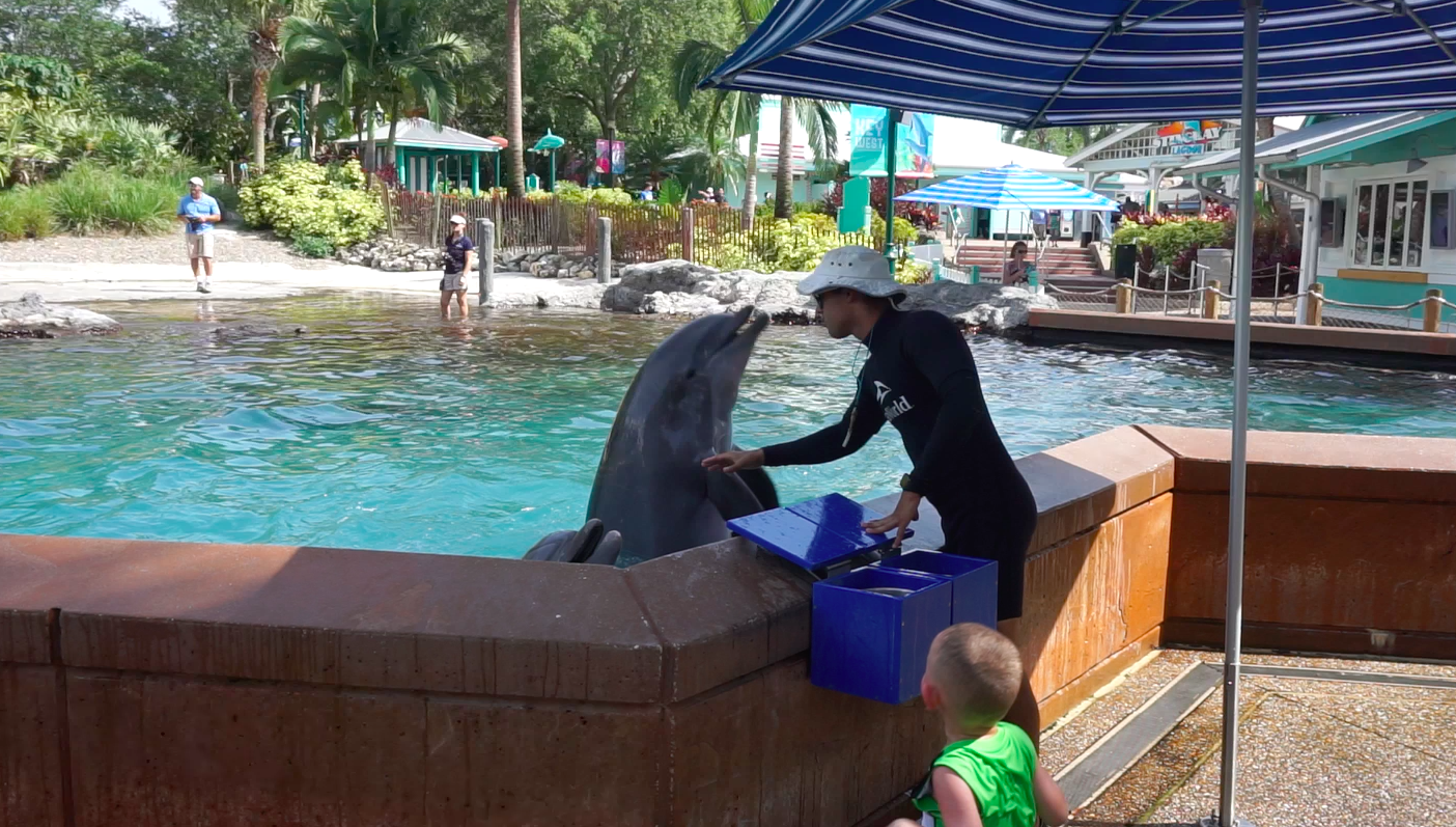 Foto do treinador alimentando o golfinho durante a interação com os animais no SeaWorld, o Dolphin Up-Close Tour