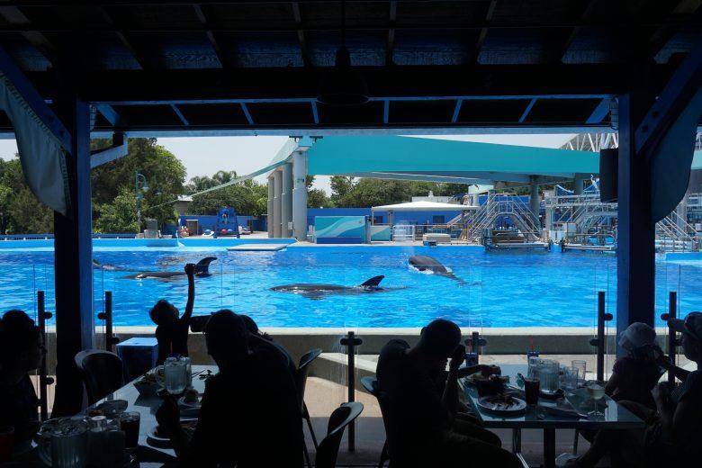 As baleias do SeaWorld pulando pela piscina, visível na janela do restaurante