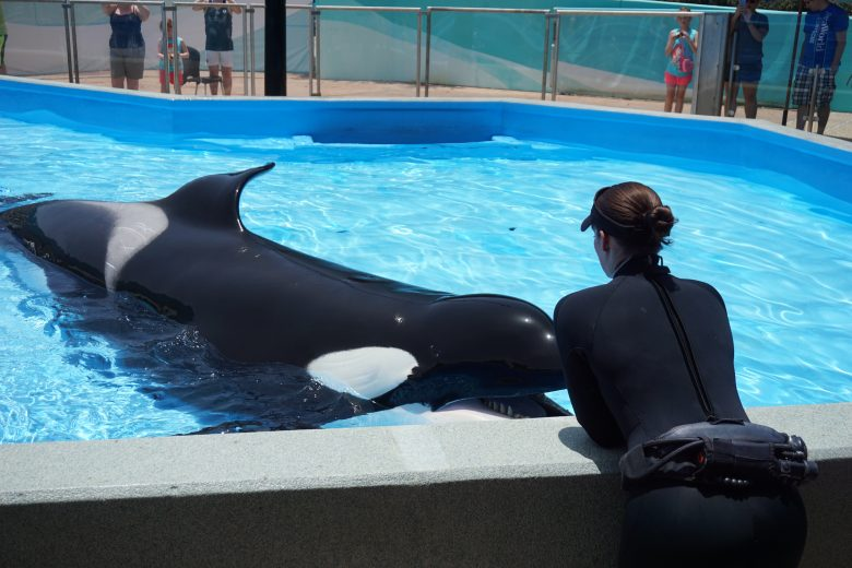 Foto da interação entre a treinadora e a baleia no SeaWorld