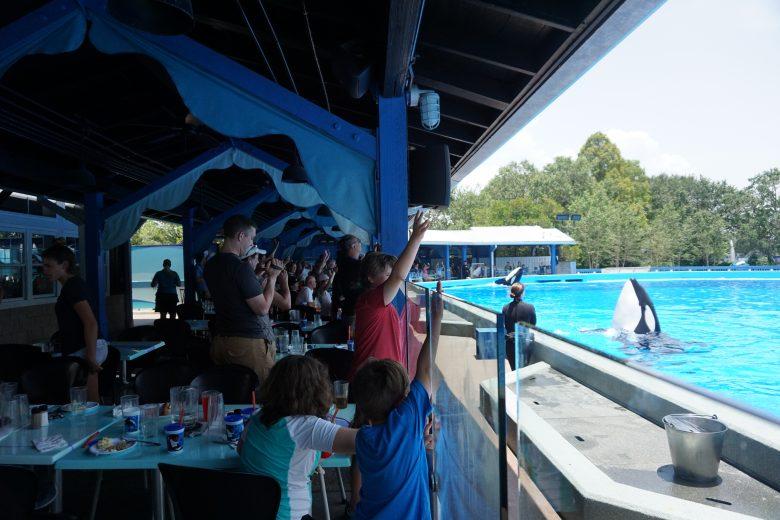 Foto dos visitantes no restaurante olhando pela janela para ver a apresentação na piscina ao lado