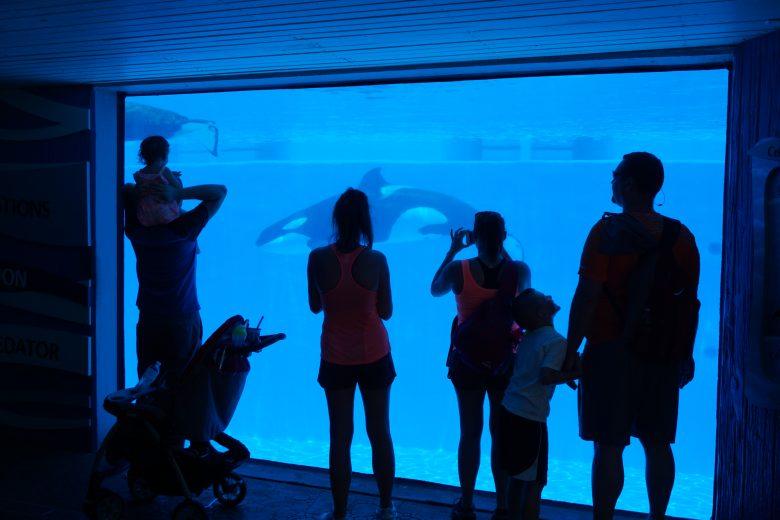 Shamu Up-close, o aquário das baleias aberto a todos do parque, com visitantes em frente observando a baleia enquanto ela nada