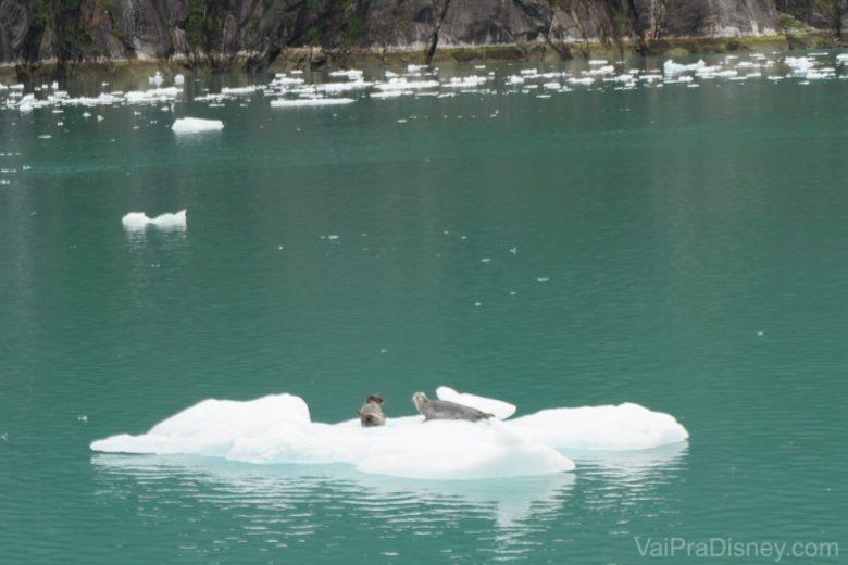 Foto das focas descansando no gelo vistas durante o passeio pelas geleiras
