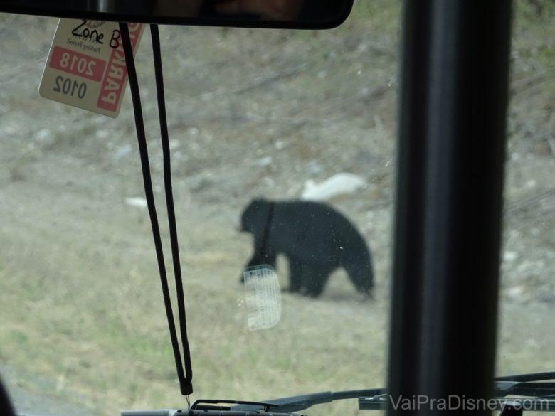 Foto do urso visto através da janela do ônibus
