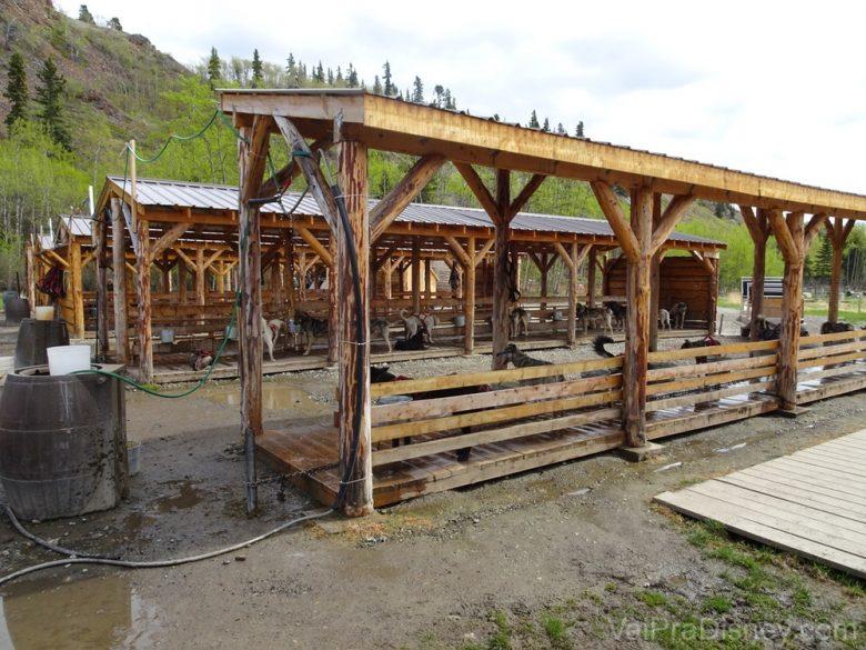 Foto do local dos cachorros em Caribou Crossing