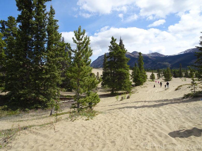 Foto do Deserto Carcross, no Alaska