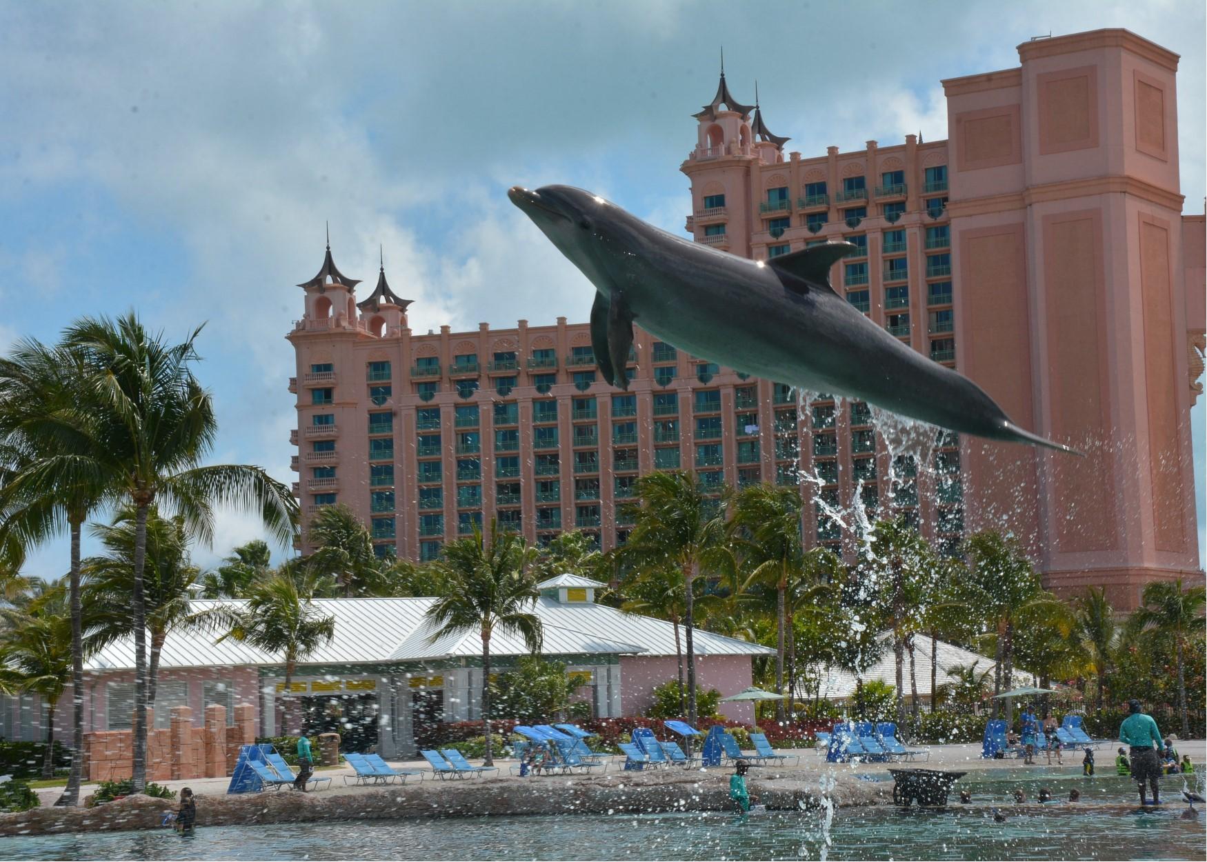 Foto do golfinho saltando na piscina, com o resort Atlantis ao fundo