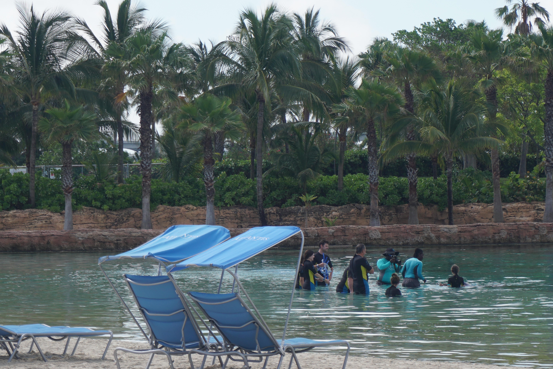 Foto de um grupo fazendo o nado no raso.