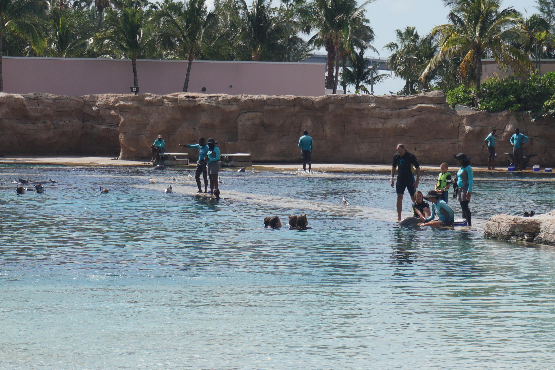 É bem fundo onde acontece o nado com golfinhos, e não dá pé pra ninguém. Por isso tem que usar colete salva-vidas