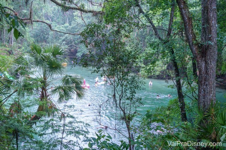 Um pouco de água, um pouco de mato, tudo sempre misturado nos springs da Flórida.
