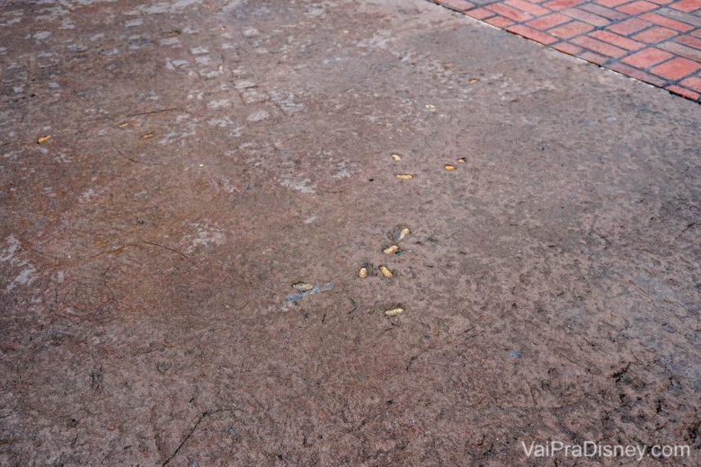 Cascas de amendoim no chão.