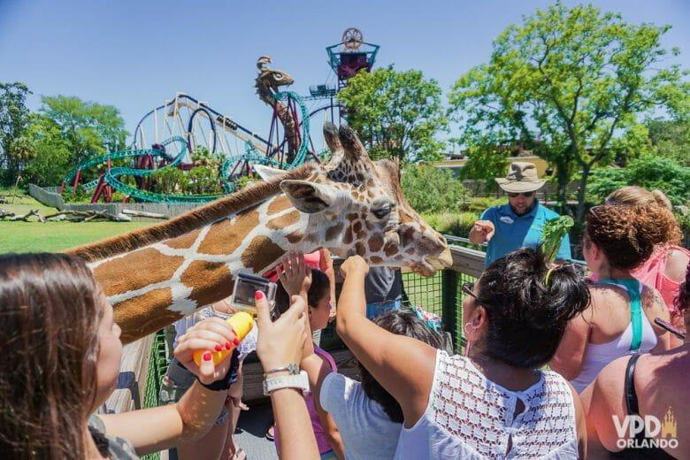 Busch Gardens é um dos parques que tem muita montanha russa radical e experiência com animais