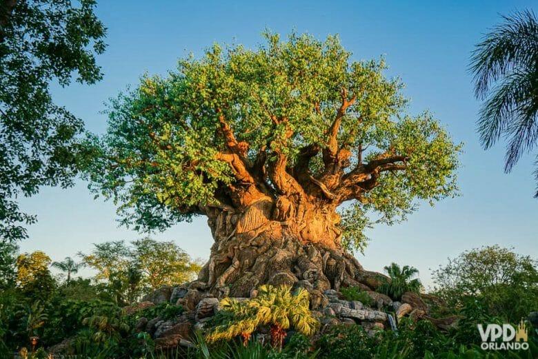 O Kali River Rapids fica no Animal Kingdom e molha MUITO! Não tem como levar mochila mesmo. Foto da árvore da vida, que é símbolo do Animal Kingdom, com o céu azul ao fundo.